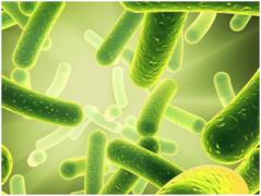 长期吃益生菌会产生依赖性?!真相还是恶意传谣?